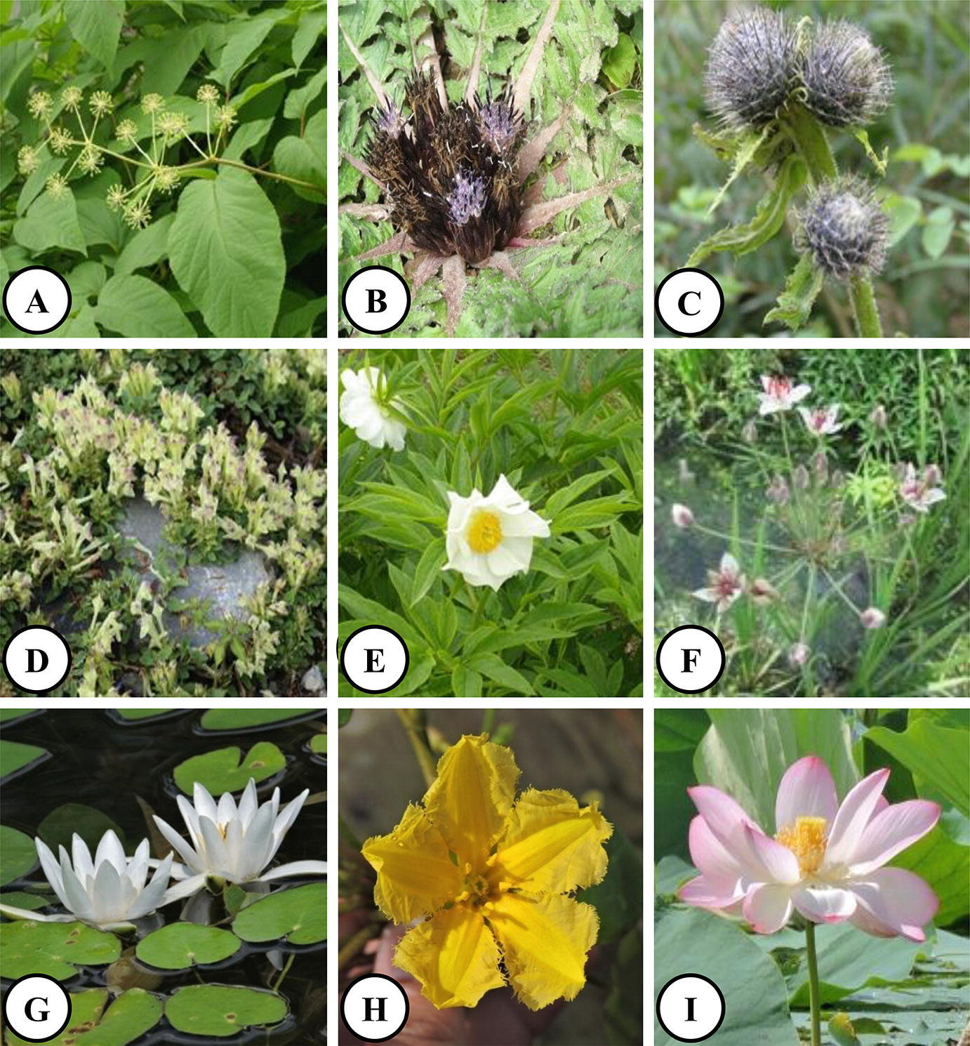 An Updated Taxonomic Checklist Of Angiosperms In Jammu And Kashmir State Springerlink