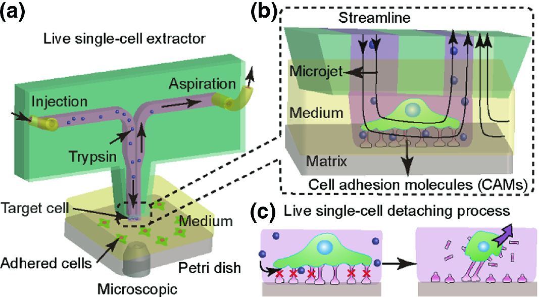 Microfluidic Chip-Based Live Single-Cell Probes | SpringerLink