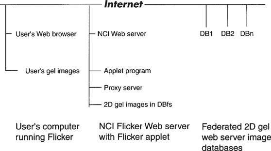 Comparing 2-D Electrophoresis Gels Across Internet Databases
