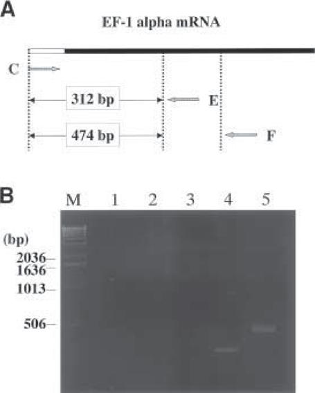 Construction of Full-Length-Enriched cDNA Liries | SpringerLink