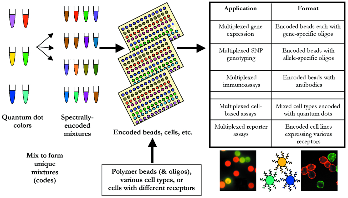 Applications Of Quantum Dots In Biology Springerlink