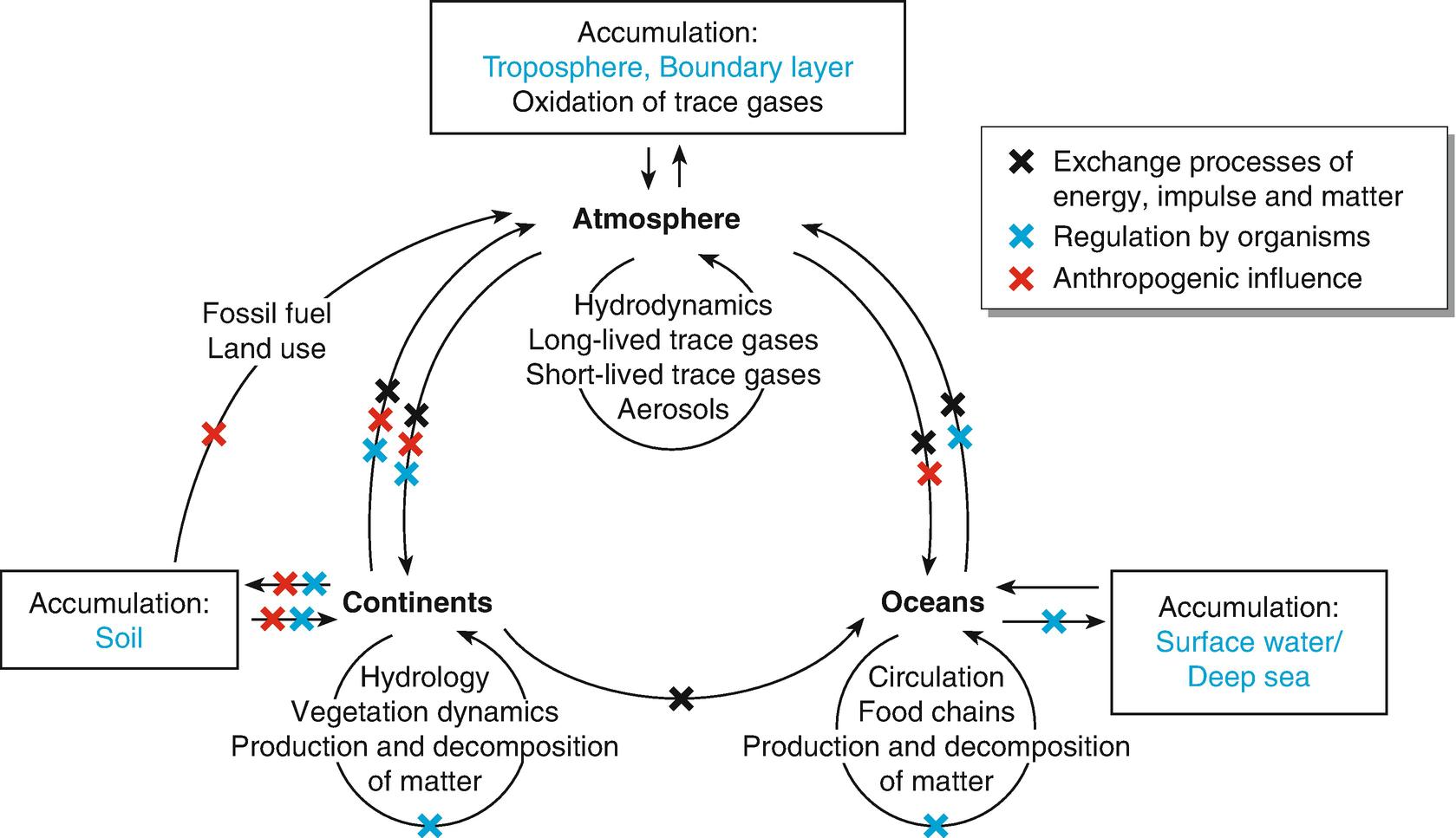 Global Biogeochemical Cycles | SpringerLink