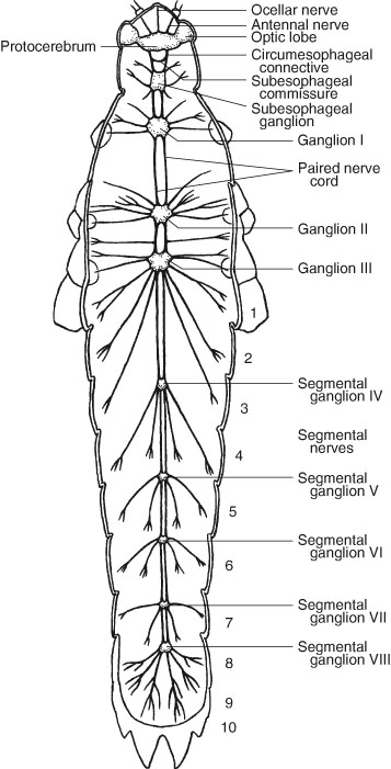Internal Anatomy of Insects | SpringerLink