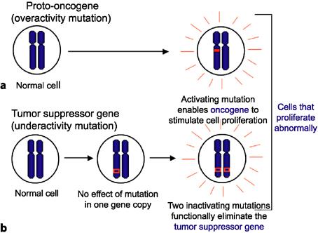 familial cancer tumour suppressor genes)