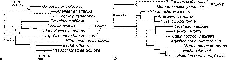 Of tree phylogenetic parts a Structure of