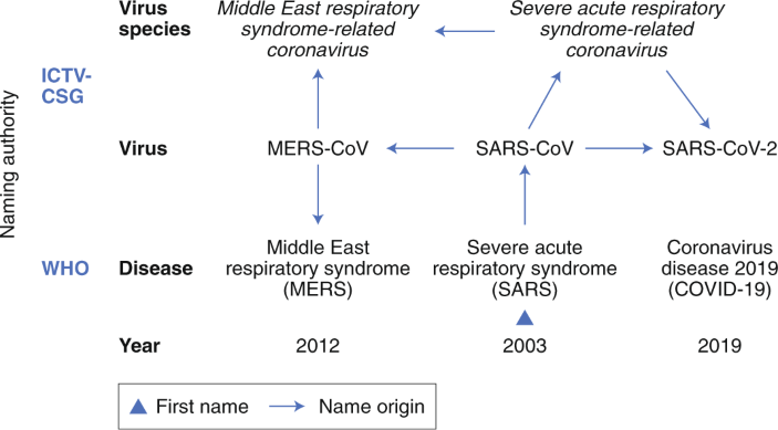 The species Severe acute respiratory syndrome-related coronavirus ...