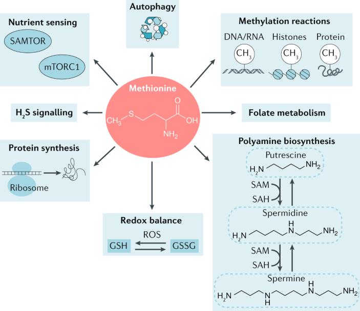 how much methiionine in science diet