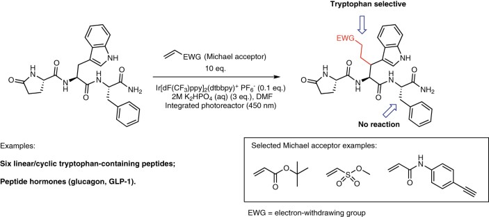 Photo Gluing On Peptides Nature Catalysis
