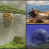 BMC Ecology Image Competition Announcement 2019