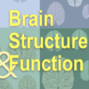 What makes a prize-winning paper? Observations from the 2020 Brain Structure and Function Editors' Choice Award