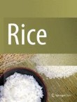 Rice Cover Image