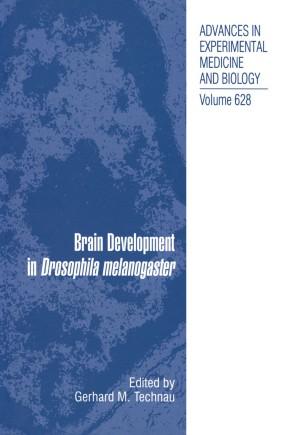 Brain Development in Drosophila melanogaster