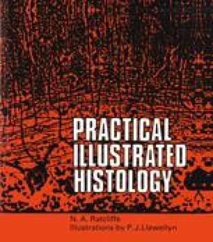 Practical Illustrated Histology