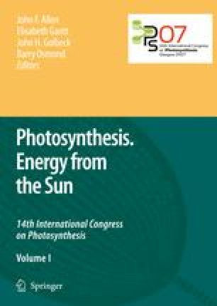 Photosynthesis. Energy from the Sun
