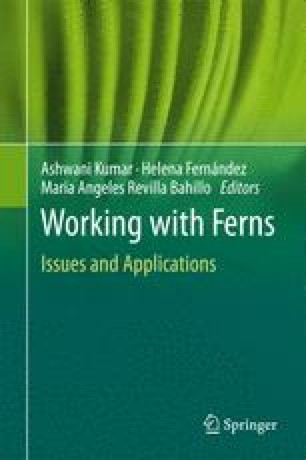 Ferns: From Traditional Uses to Pharmaceutical Development