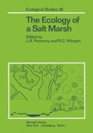 The Ecology of a Salt Marsh