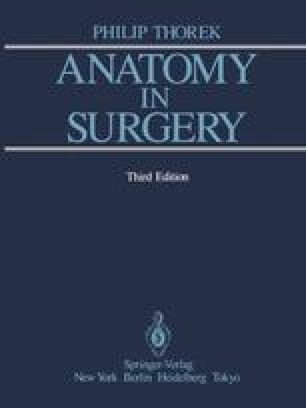 Anatomy in Surgery
