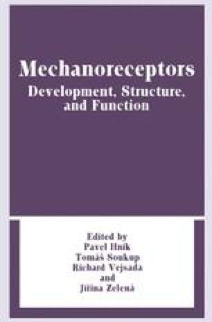 Mechanoreceptors