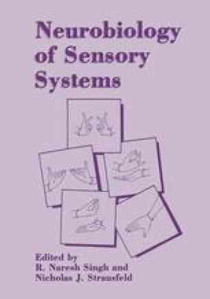 Neurobiology of Sensory Systems