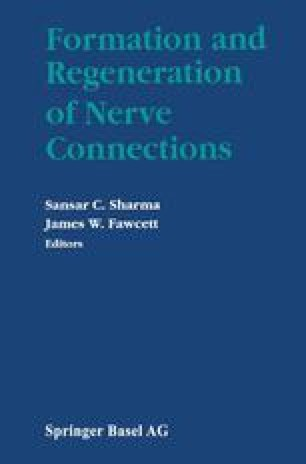 Formation and Regeneration of Nerve Connections