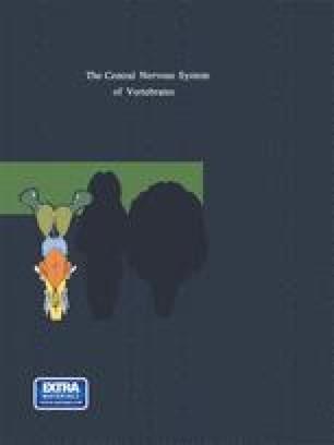 The Central Nervous System of Vertebrates