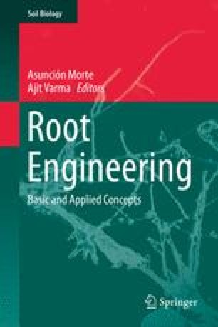 Root Engineering