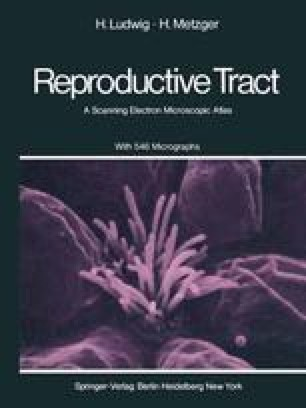 The Human Female Reproductive Tract