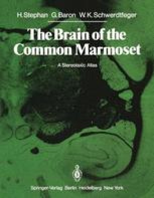 The Brain of the Common Marmoset (Callithrix jacchus)