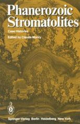 Phanerozoic Stromatolites