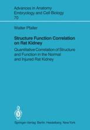 Structure Function Correlation on Rat Kidney