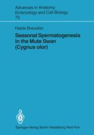 Seasonal Spermatogenesis in the Mute Swan (Cygnus olor)