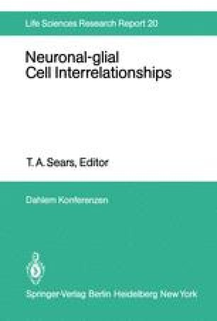 Neuronal-glial Cell Interrelationships