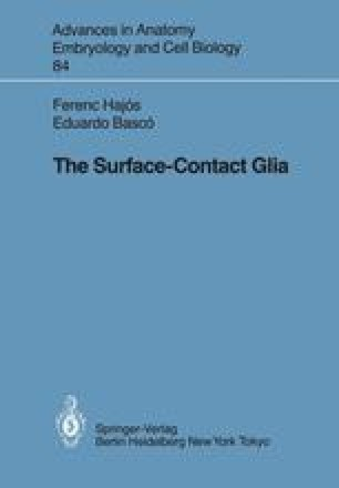The Surface-Contact Glia