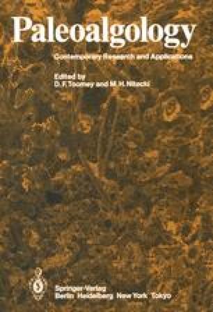 Paleoalgology