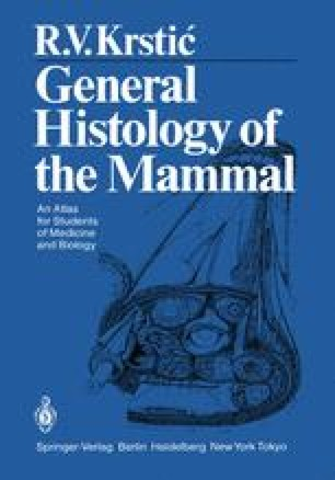General Histology of the Mammal