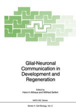 Glial-Neuronal Communication in Development and Regeneration
