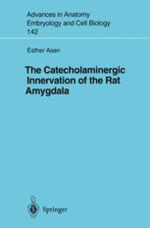 The Catecholaminergic Innervation of the Rat Amygdala