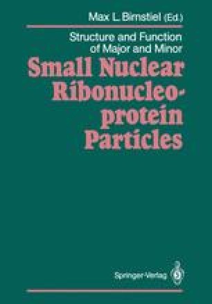 Structure and Function of Major and Minor Small Nuclear Ribonucleoprotein Particles