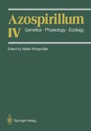 Azospirillum IV