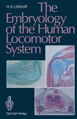 The Embryology of the Human Locomotor System