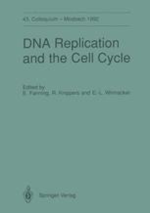 DNA Replication and the Cell Cycle