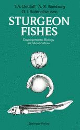 Sturgeon Fishes