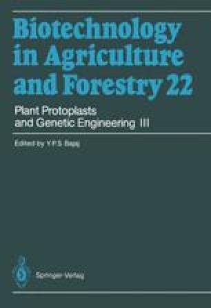 Plant Protoplasts and Genetic Engineering III