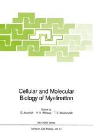 Cellular and Molecular Biology of Myelination