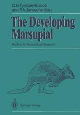 The Developing Marsupial