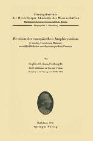 Revision der europäischen Amphicyoninae