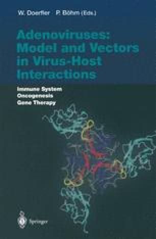 Adenoviruses: Model and Vectors in Virus-Host Interactions