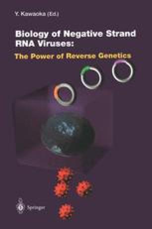 Reverse Genetics of Mononegavirales | SpringerLink