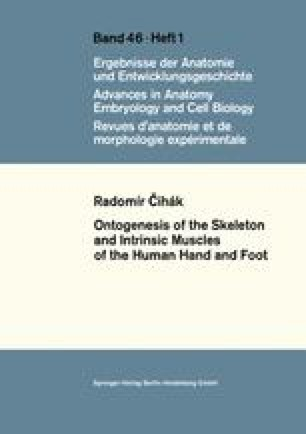 Ontogenesis of the Skeleton and Intrinsic Muscles of the Human Hand and Foot