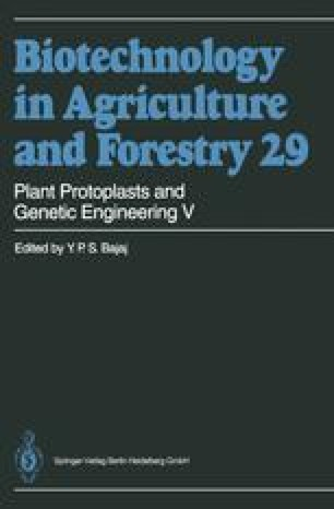 Plant Protoplasts and Genetic Engineering V